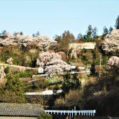 徳島、剣山麓の村の」春