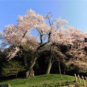 徳島、剣山麓の村、桜