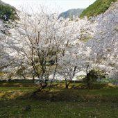 徳島、剣山、山麓の春