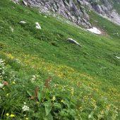 長野、駒ケ岳、千畳敷カールの花