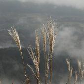 岡山、下蒜山、幻想的風景
