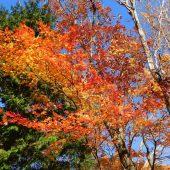 岡山、那岐山麓の紅葉
