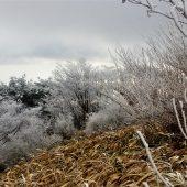 兵庫、六甲山の霧氷