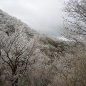 兵庫、六甲山山頂下