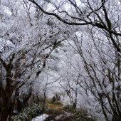 兵庫、六甲山霧氷のトンネル