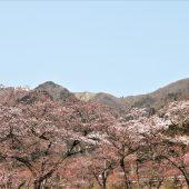 滋賀、蓬莱山麓の春