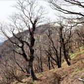 滋賀、蓬莱山の春