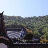 兵庫、但馬、麓から望む竹田城