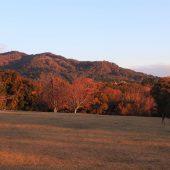 奈良公園、飛火野