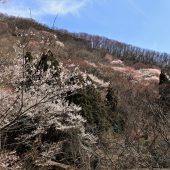 大阪、能勢妙見山