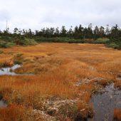 黒谷地湿原