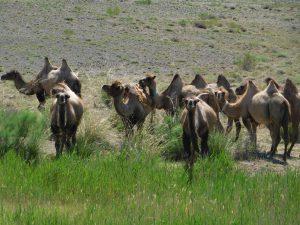 蘭州から烏魯木斉へ/烏魯木斉 ジュンガル盆地/砂漠の道 カナスへの玄関、布爾津/阿勒泰の深緑の谷
